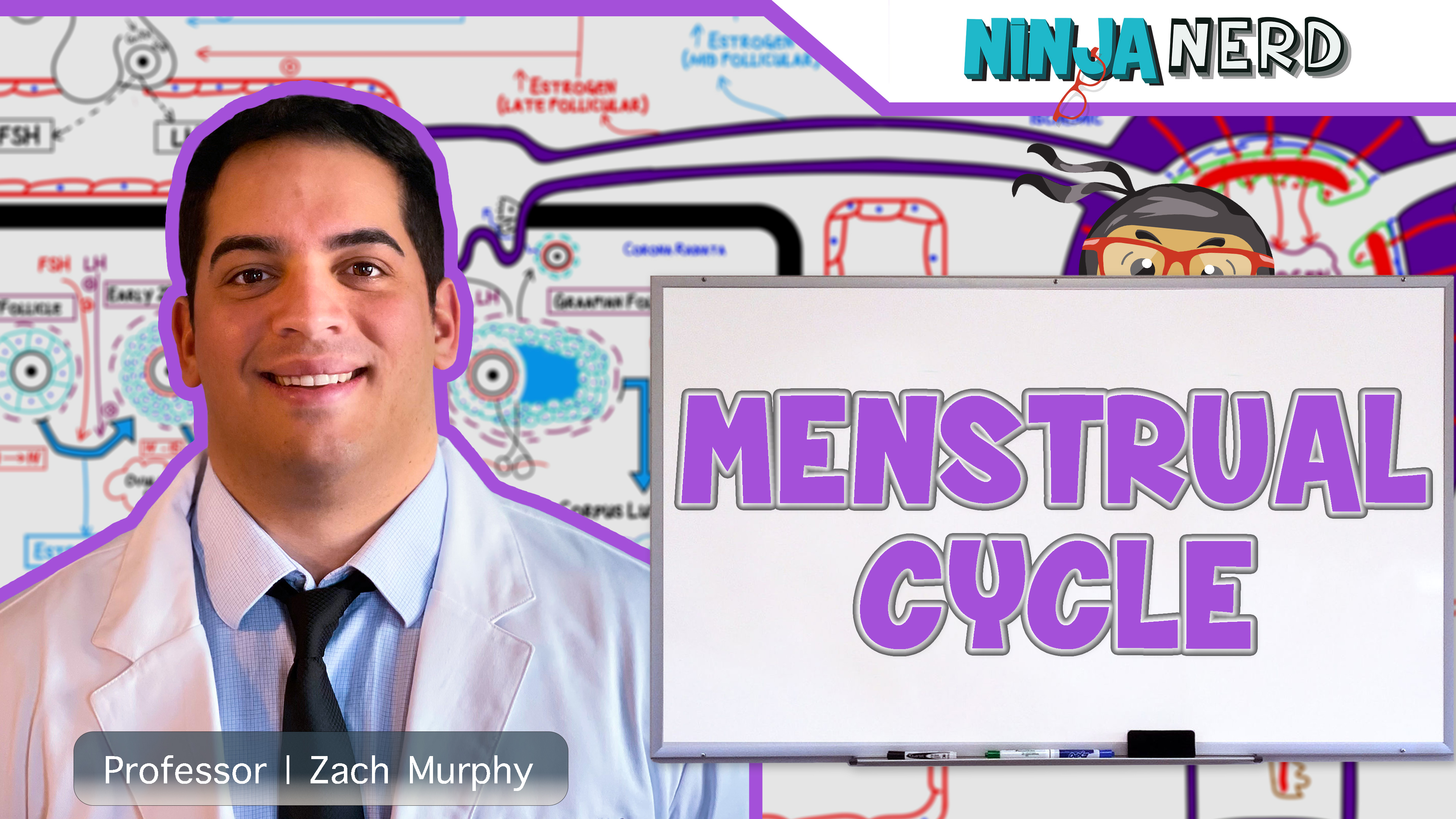 Female Reproductive Cycle | Menstrual Cycle