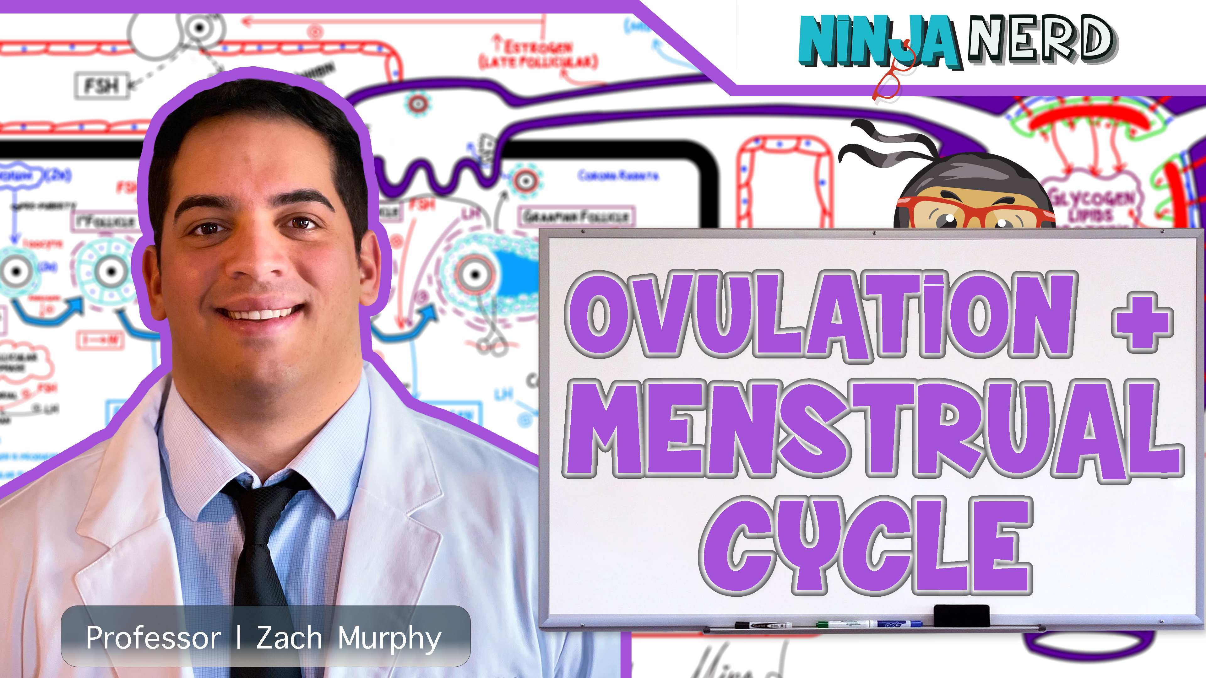Female Reproductive Cycle | Ovulation & Menstrual Cycle: Overview