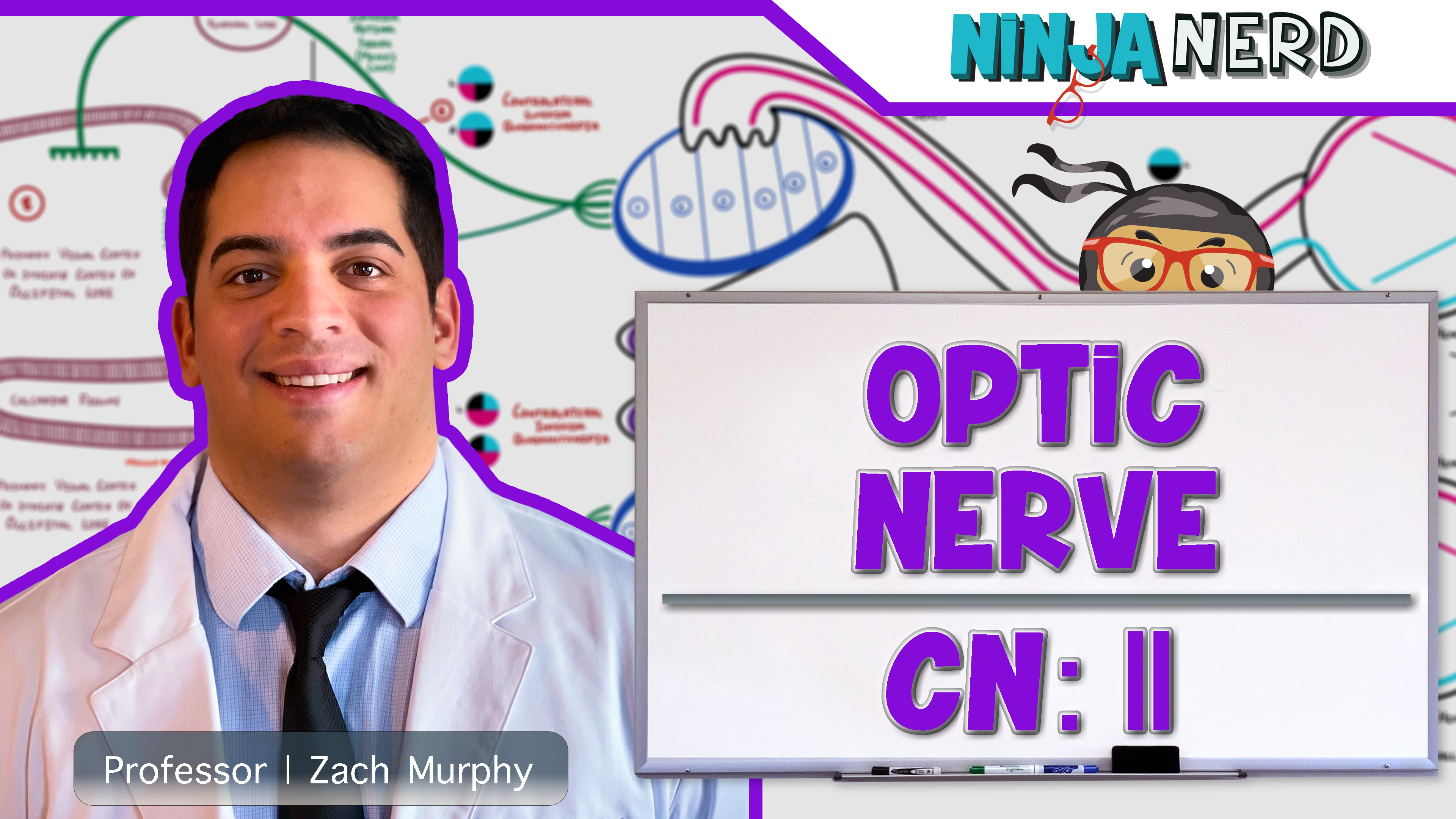Optic Nerve   Cranial Nerve II: Visual Pathway and Lesions