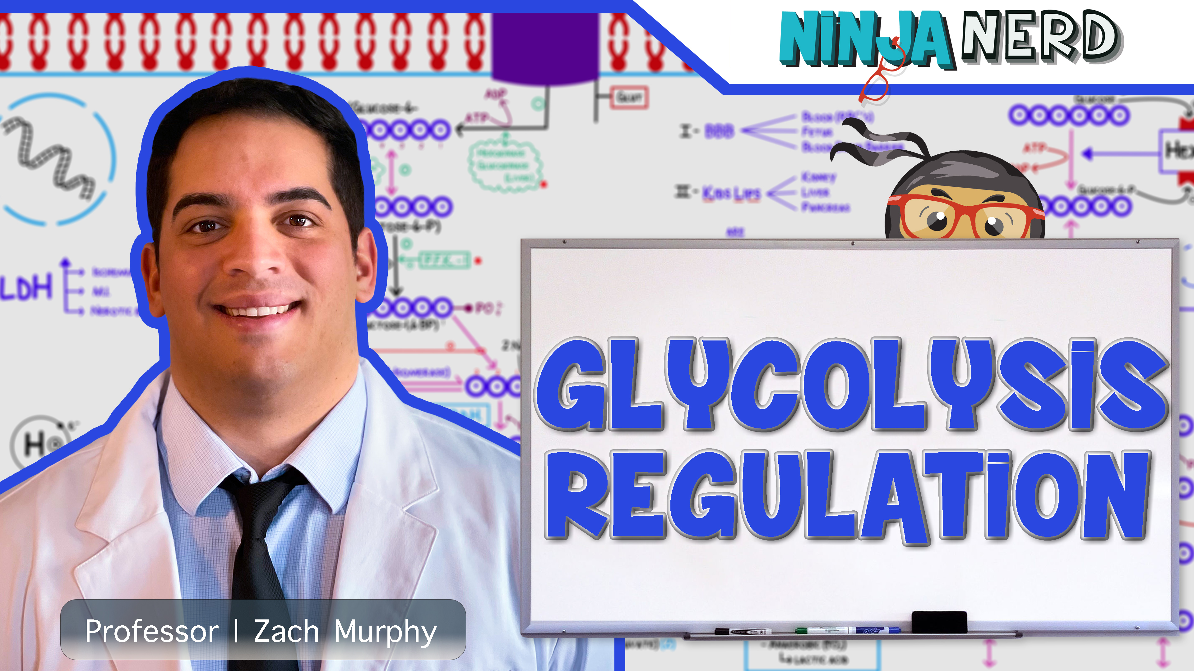 Regulation of Glycolysis