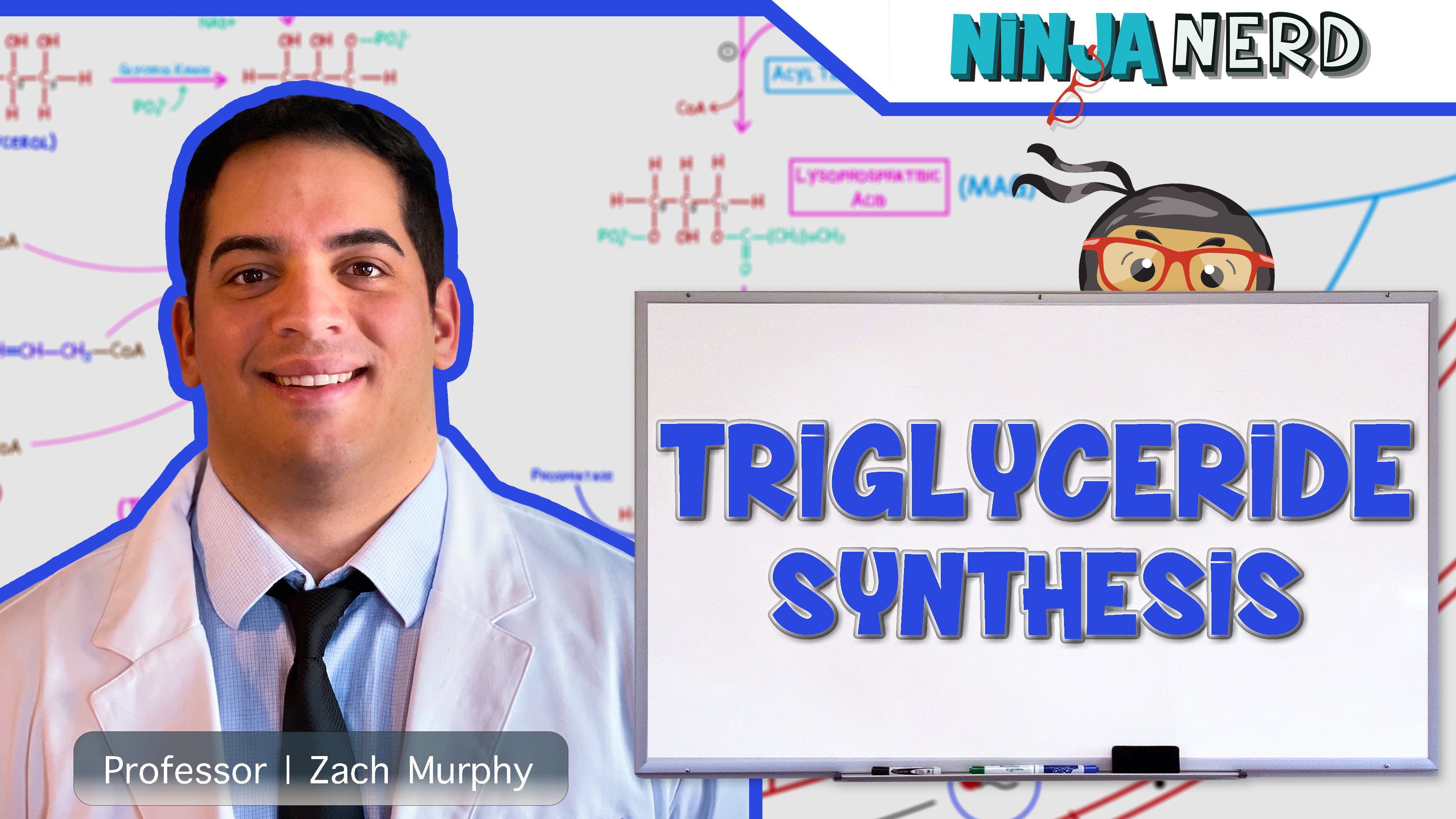 Triglyceride Synthesis
