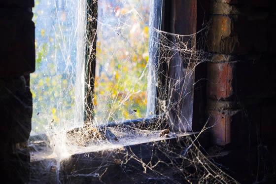 Spider webs everywhere