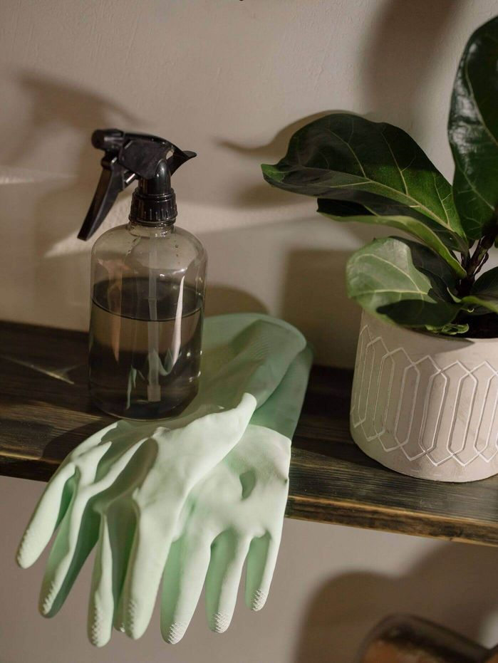 A houseplant and a spray bottle of kitchen cleaner on top of blue rubber gloves [Unioncrate]