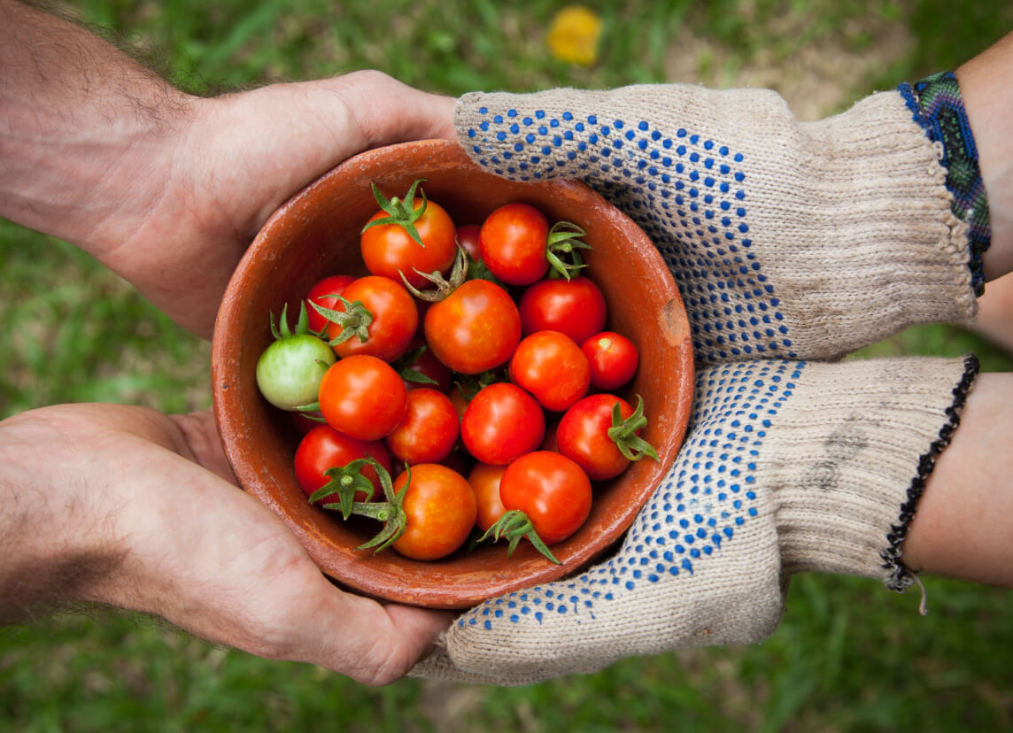 Two pairs of hands holding a bowl of tomatoes