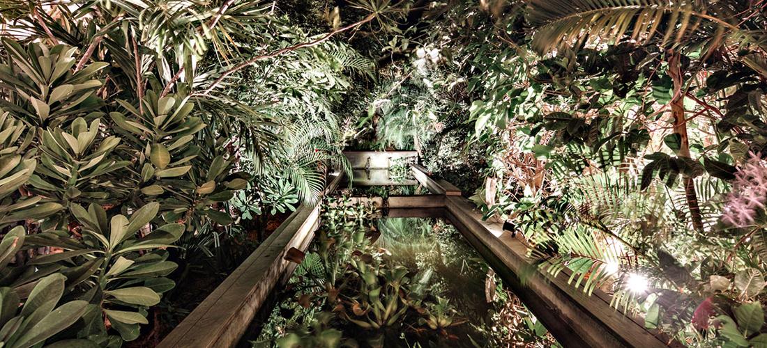Jungle Fever - Saint-Barth
