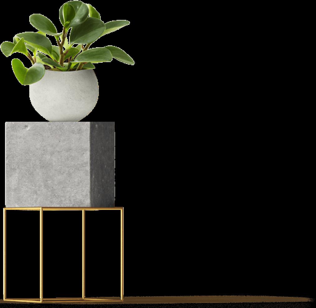 plant on stool