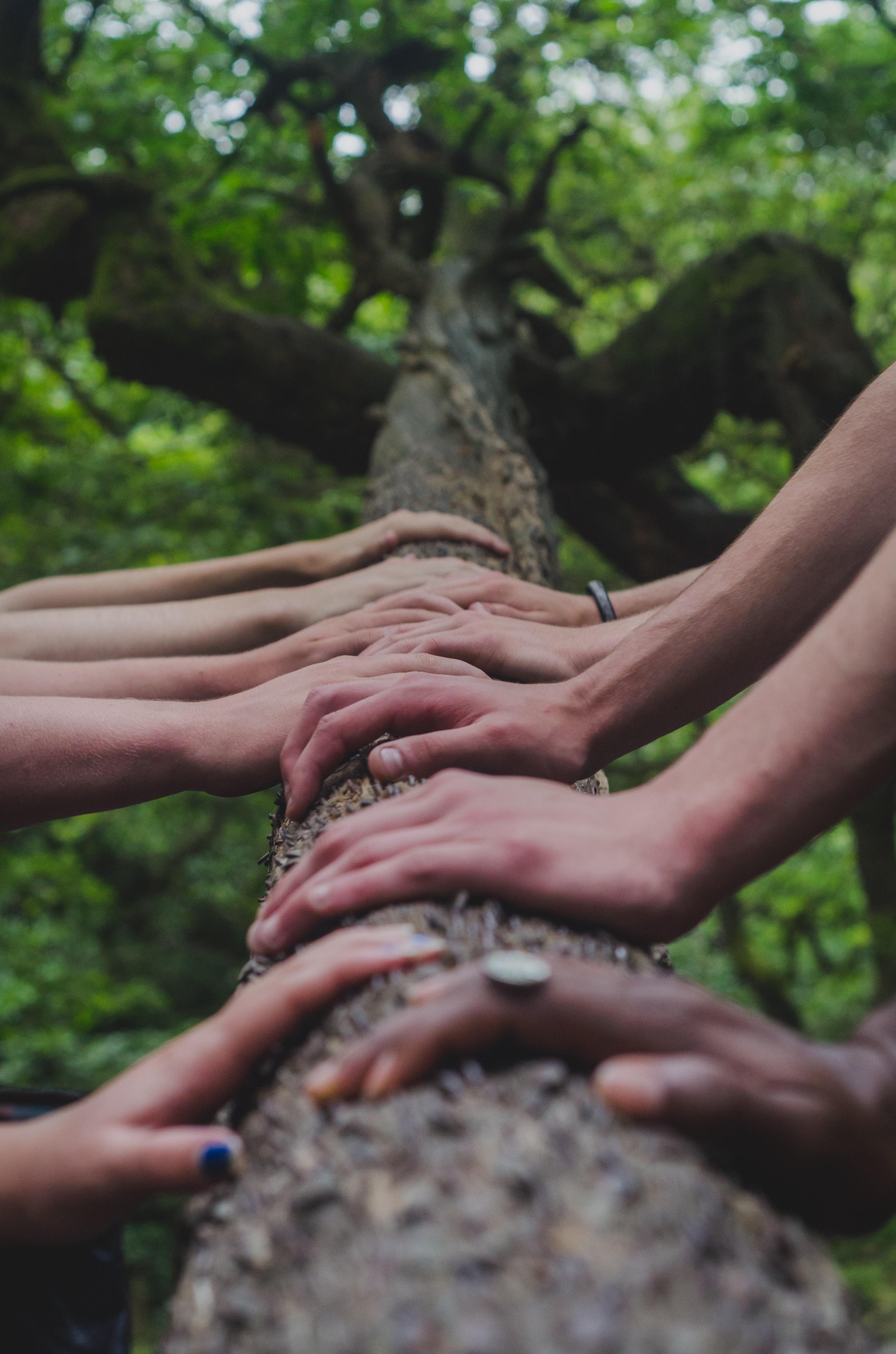 Candor, Criticism, Teamwork