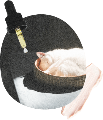 Collage of a eye dropper and a cat sleeping