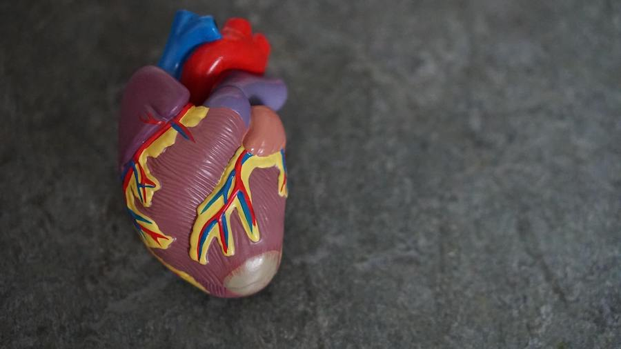 plastic fake heart on rock faded background telemetry nurse